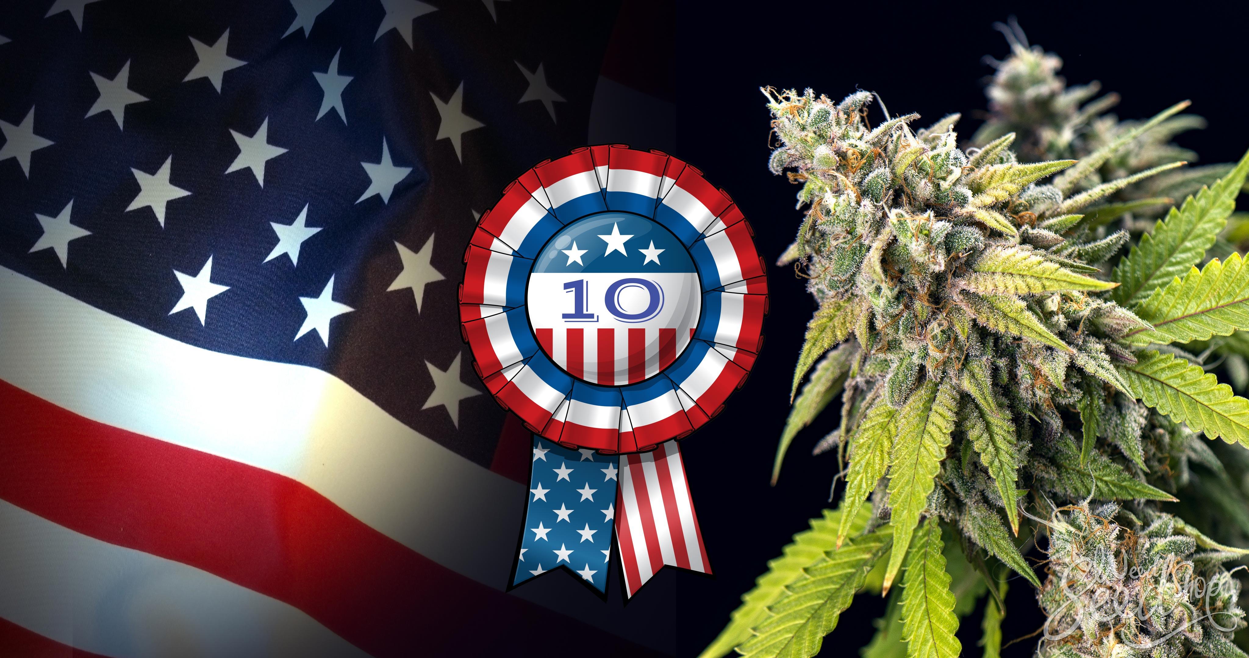 10 variétés de cannabis qui ont du succès aux US - WeedSeedShop Blog