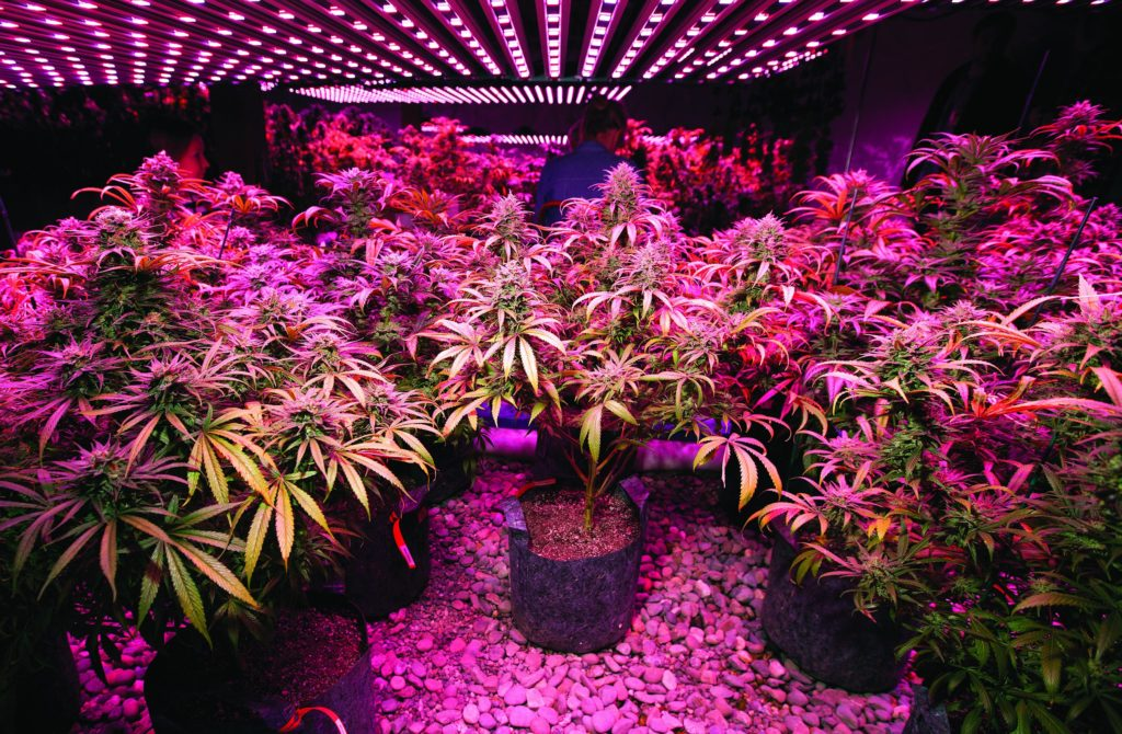 12 astuces pour cultiver une weed écolo - WeedSeedShop