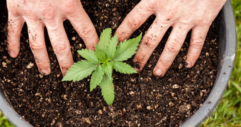 9 formas para cultivar marihuana ecológica