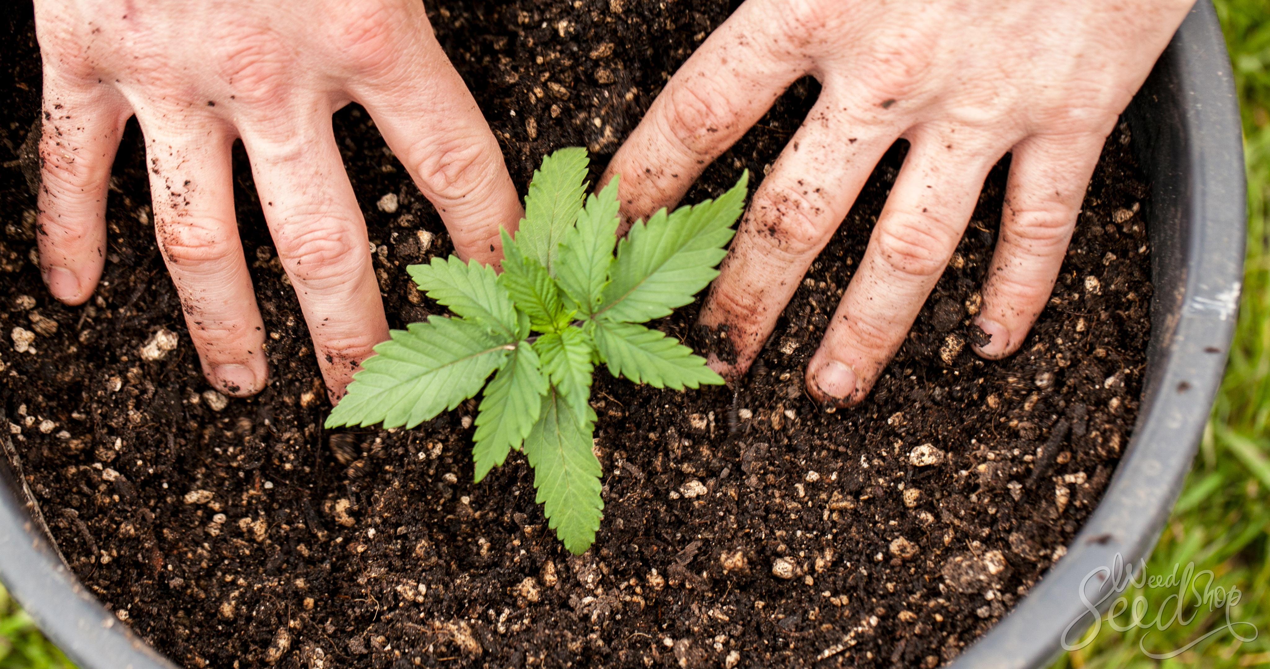 9 Ways to Grow Eco-Friendly Weed- WeedSeedShop