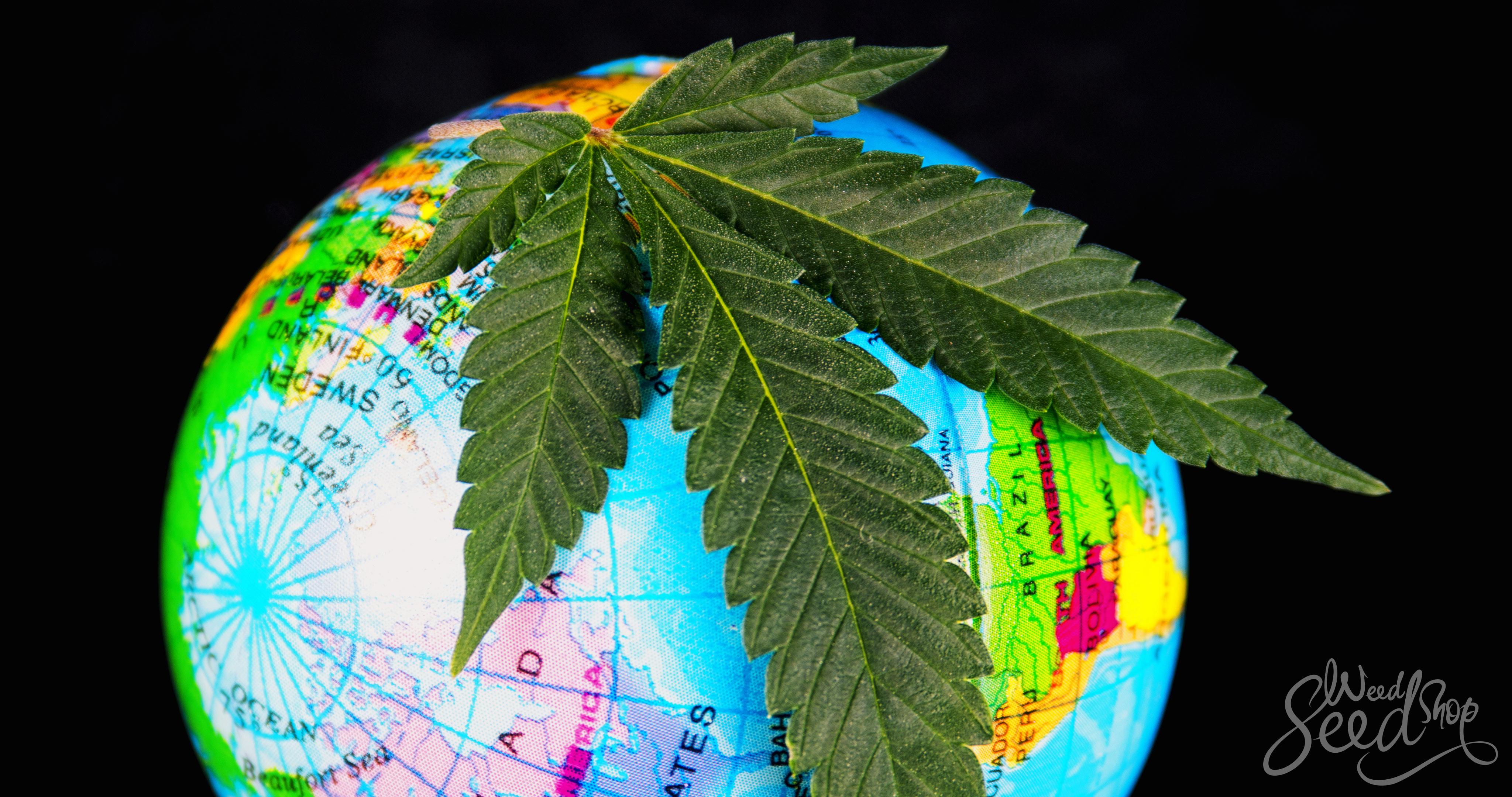 De wietcultuur wereldwijd - WeedSeedShop