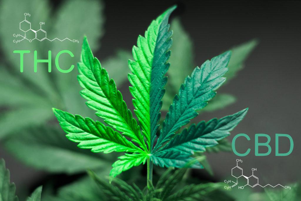 Cannabis zetpillen: Wiet door de achterdeur! - WeedSeedShop