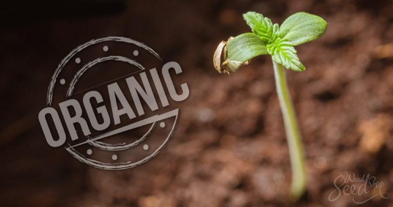 Niet alle cannabis wordt veganistisch geteeld