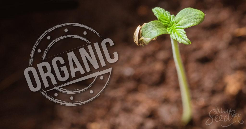 Cannabis wird nicht nur vegan erzeugt - WeedSeedShop Blog