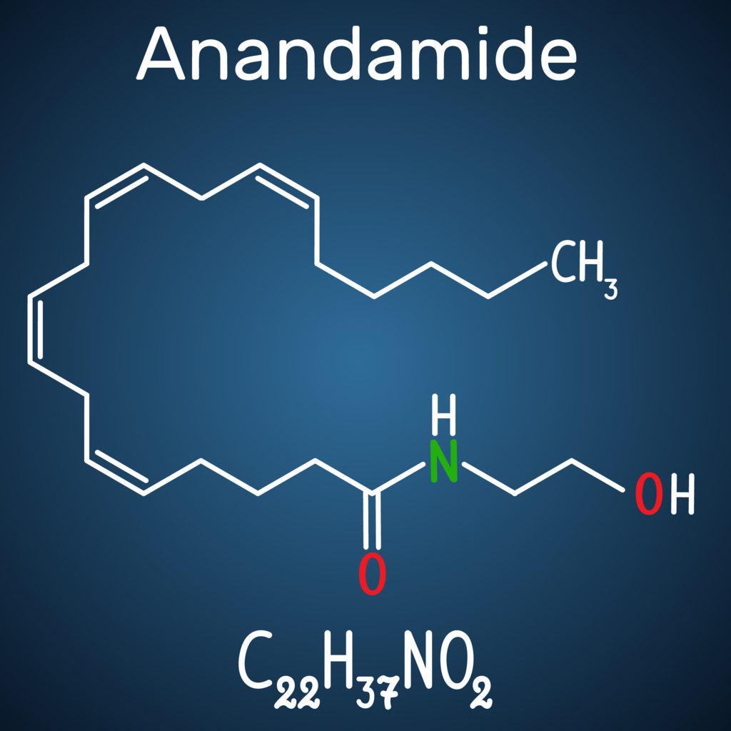 Anandamid: Das körpereigene THC- WeedSeedShop