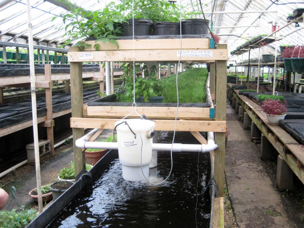 Aquaponics – Wat is het en hoe gebruik je het - WeedSeedShop Blog