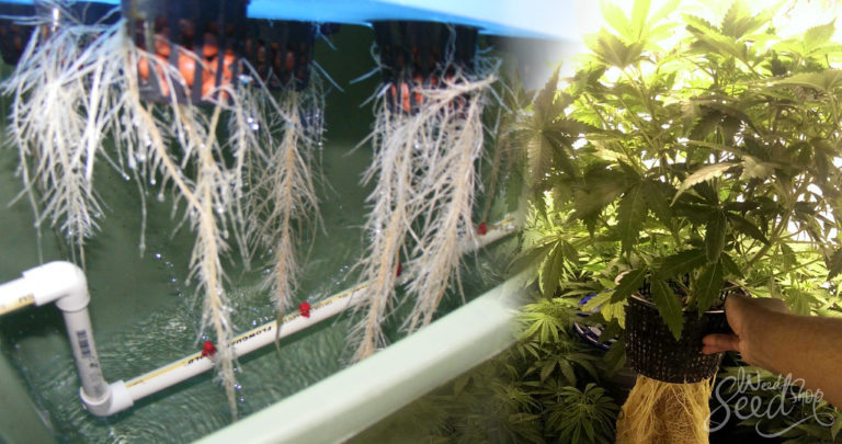 Aquaponics – What is it and how to use it