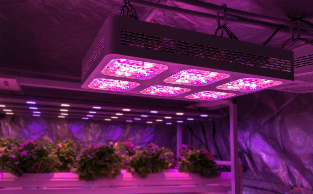 What are Autoflowering Seeds: The Basics - WeedSeedShop