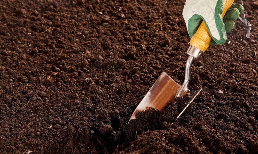 Was Sind Autoflowering Samen: die Grundlagen - WeedSeedShop