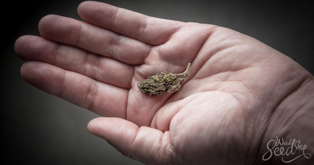 Le guide du microdosage du cannabis