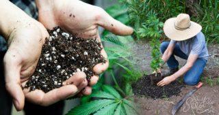 Le meilleur sol pour la culture du cannabis