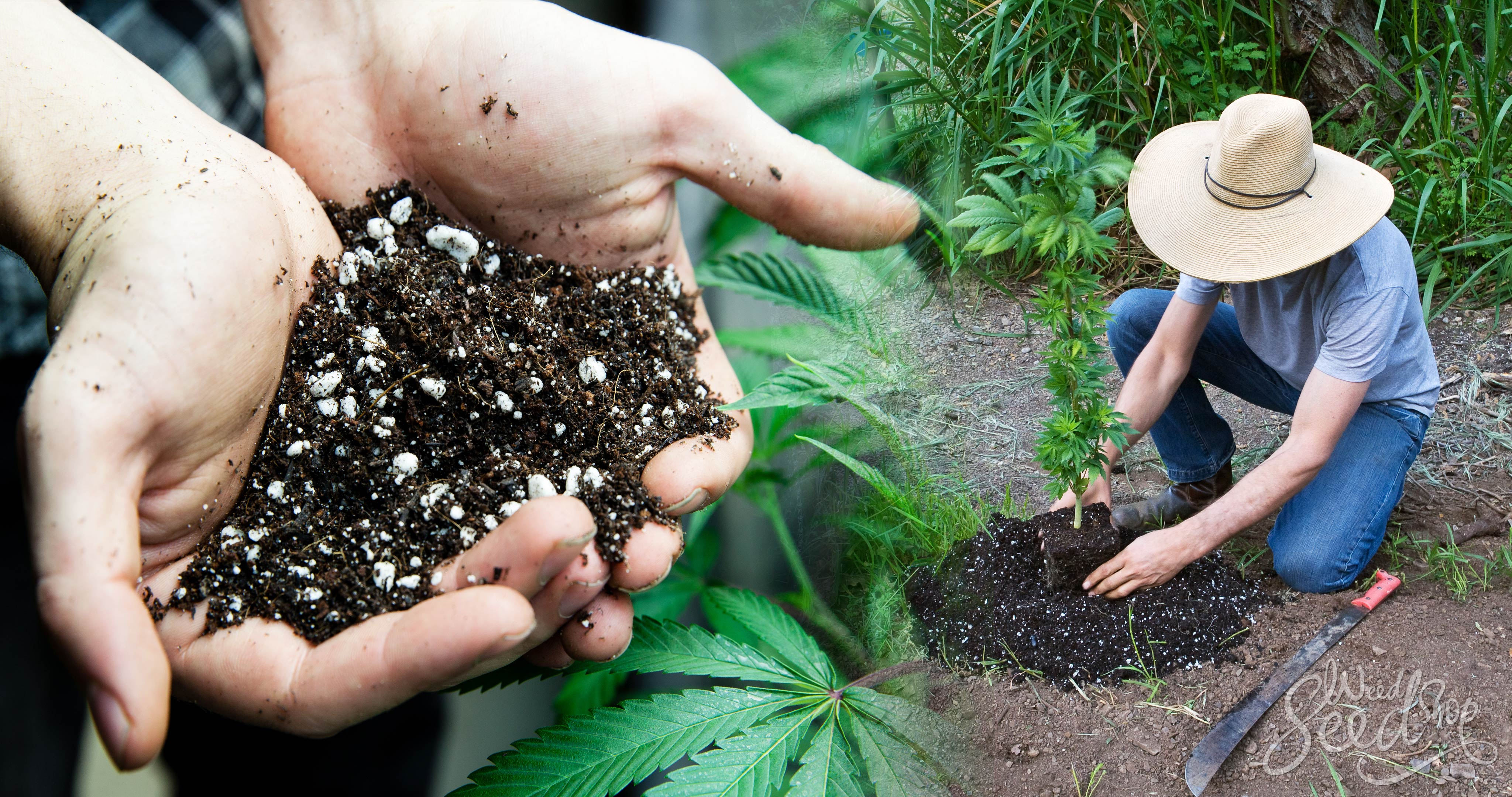 The Best Soil for Growing Cannabis – WeedSeedShop
