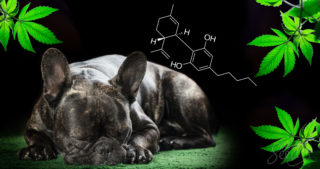 CBD for pets: Does it work and if so, how?