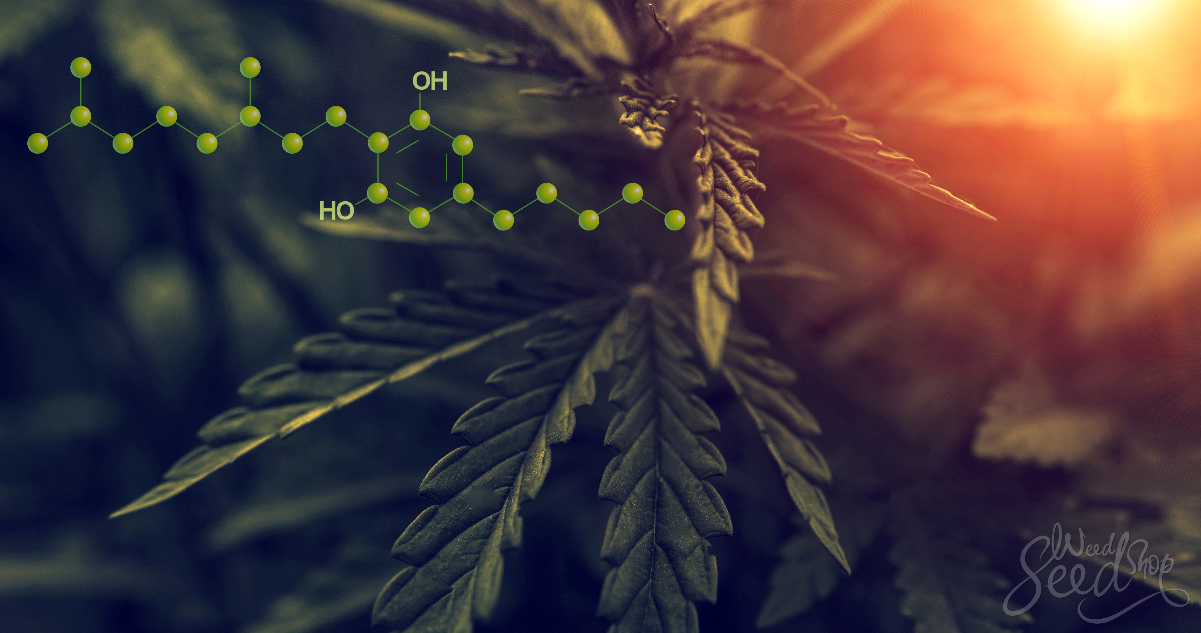 Cannabinoid Science: CBG, oder Cannabigerol - WeedSeedShop