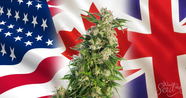 """Escarbar En Lo Que Diferencia a """"EE.UU."""" Cannabis en EE. UU Vs. Canadá Vs. Reino Unido"""