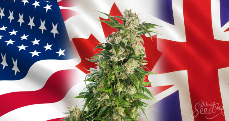 """Weeding Out What Makes """"U.S."""" Different  Cannabis in The U.S. VS. Canada VS. The UK"""