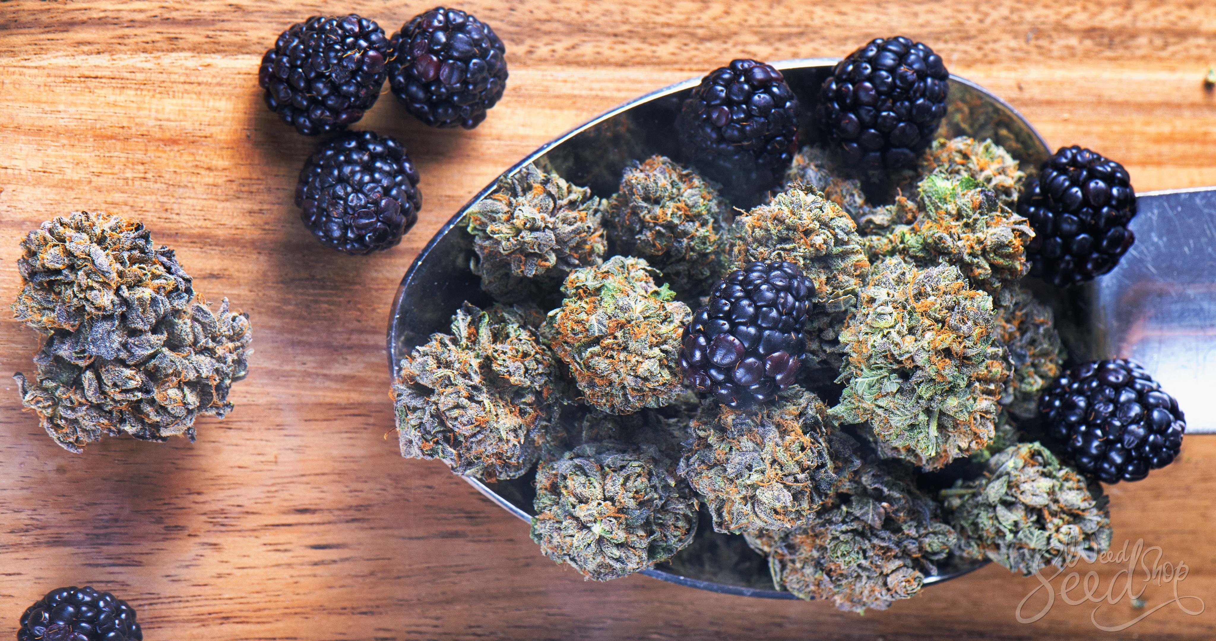 Que sont les flavonoïdes ? - WeedSeedShop