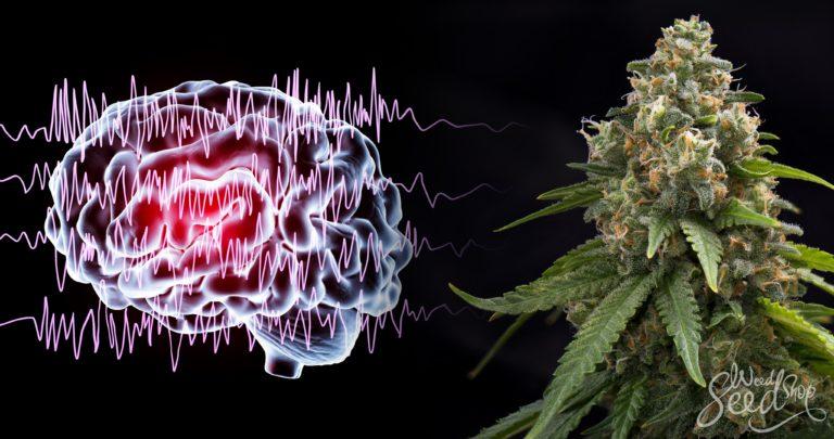 Ist Cannabis die Heilung für epileptische und nicht-epileptische Anfälle?