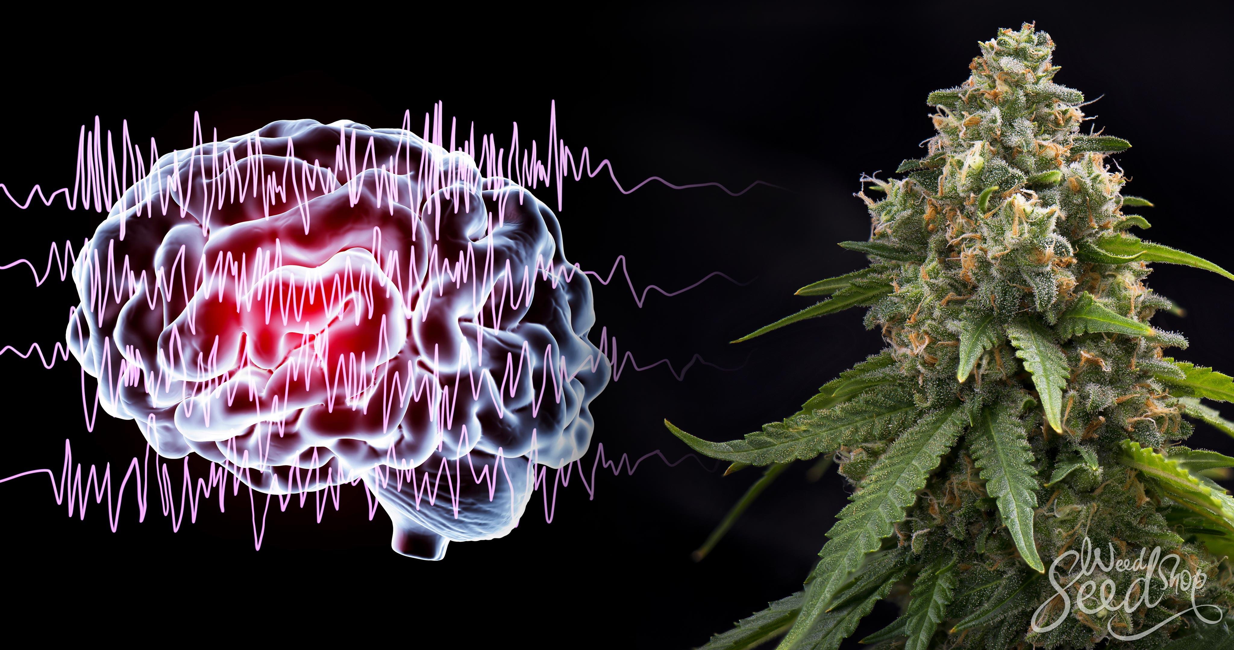 Kann Cannabis Epilepsie oder andere Anfälle behandeln? - WeedSeedShop
