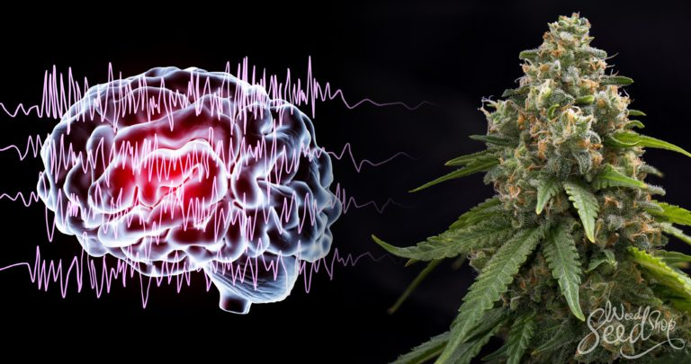 Is Cannabis the Cure for Epileptic and Non-epileptic seizures?