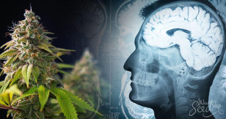 Does Marijuana Cause Psychosis & Schizophrenia?