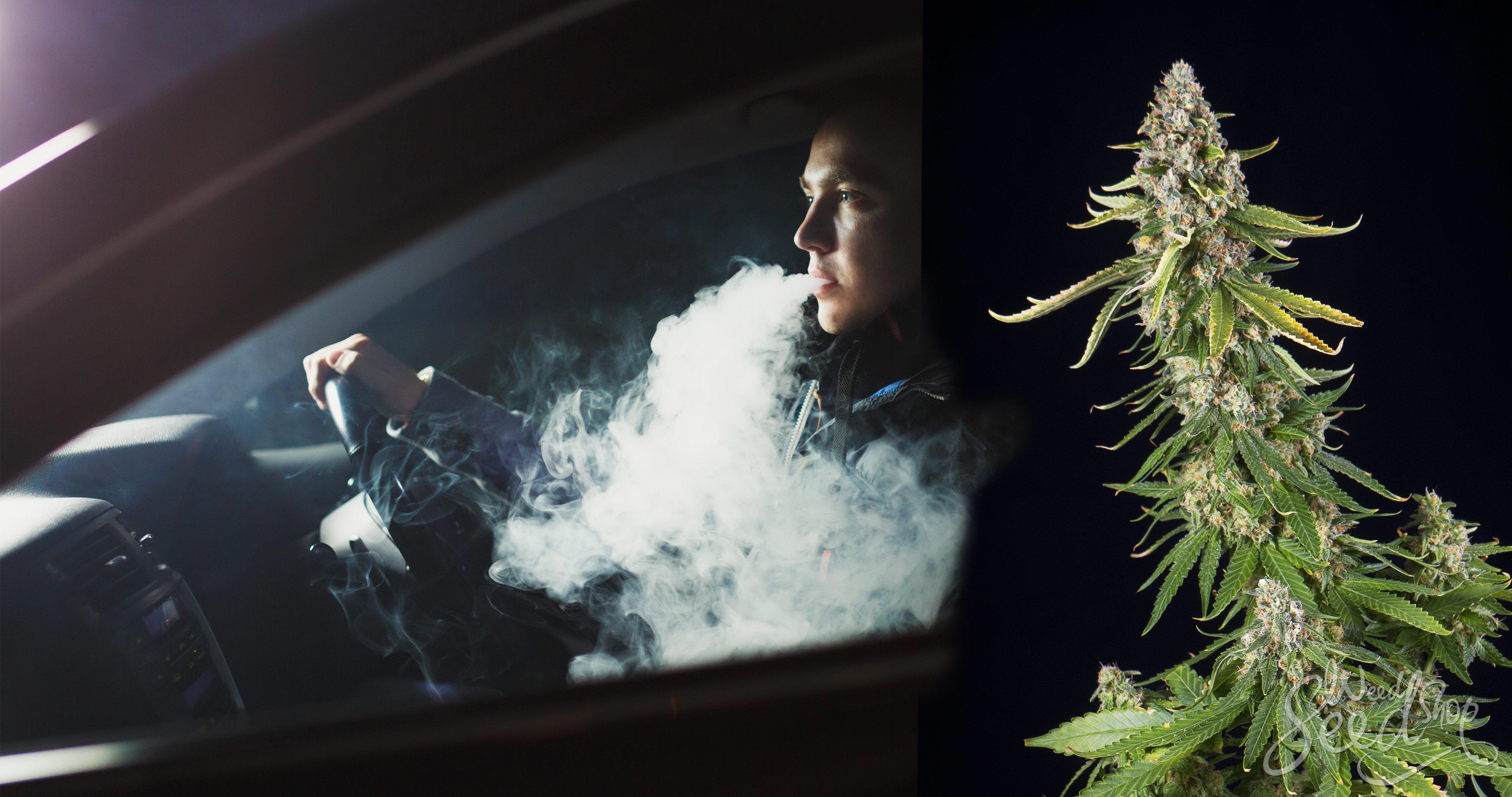 Macht Marihuana aus dir einen schlechten Autofahrer? - WeedSeedShop Blog