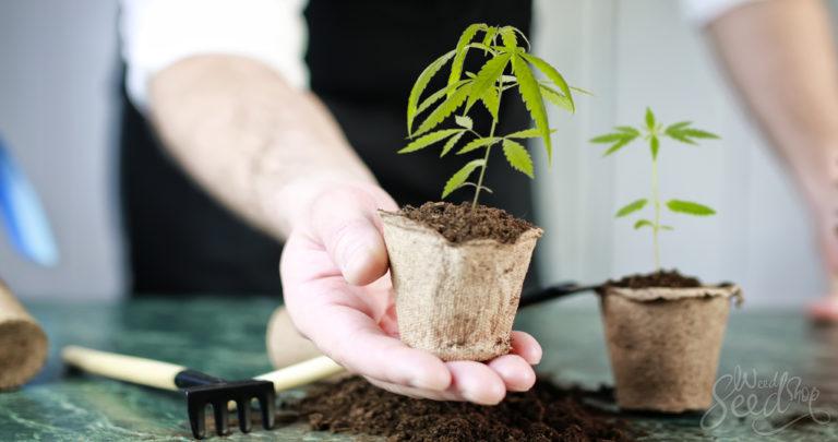 Binnen wiet kweken – wat heb je nodig?