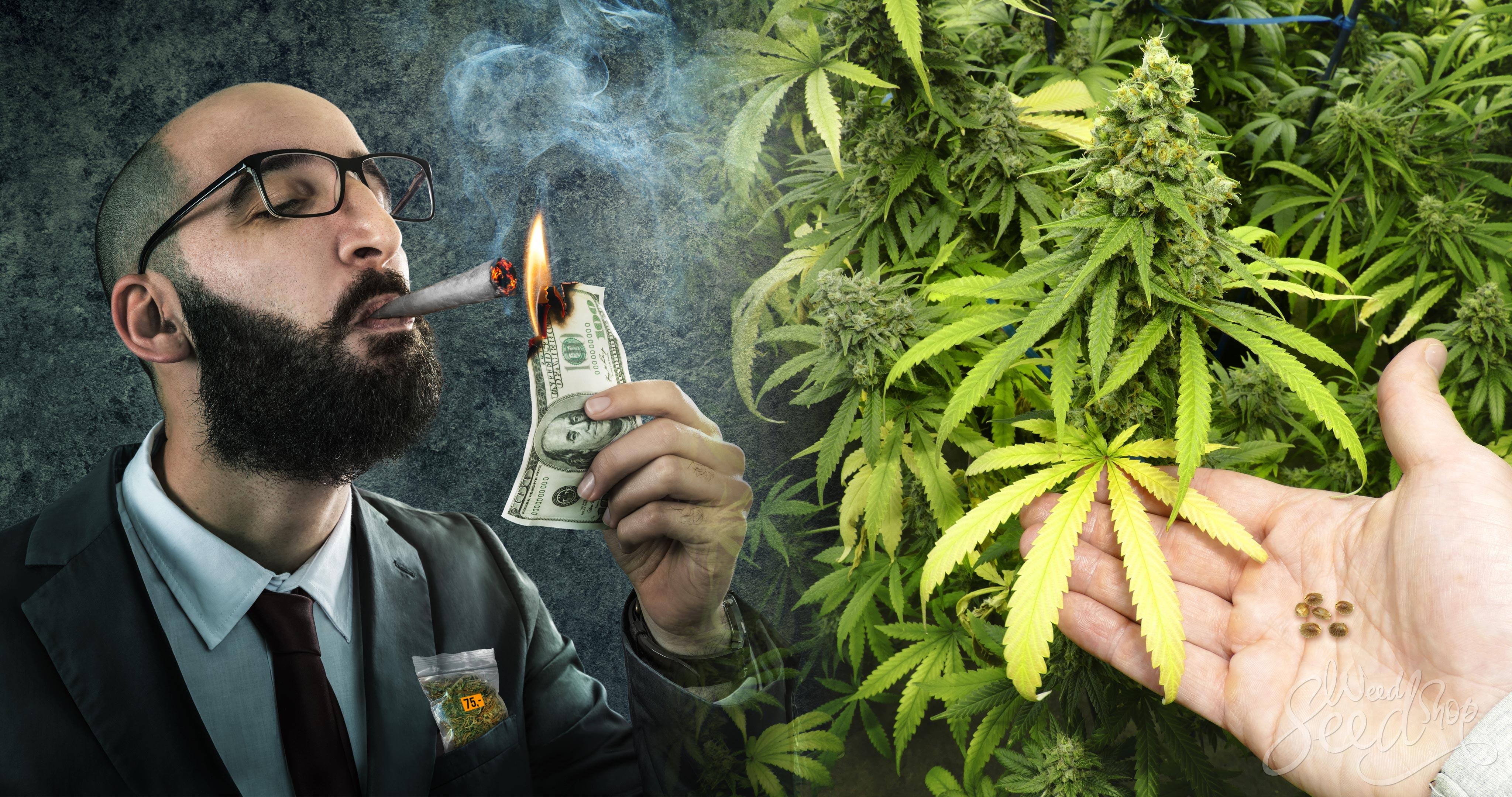 Warum es besser ist, dein eigenes Cannabis anzubauen, als es zu kaufen - Weed Seed Shop Blog