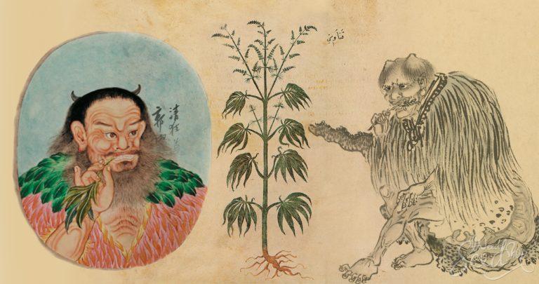 De geschiedenis van de cannabisteelt
