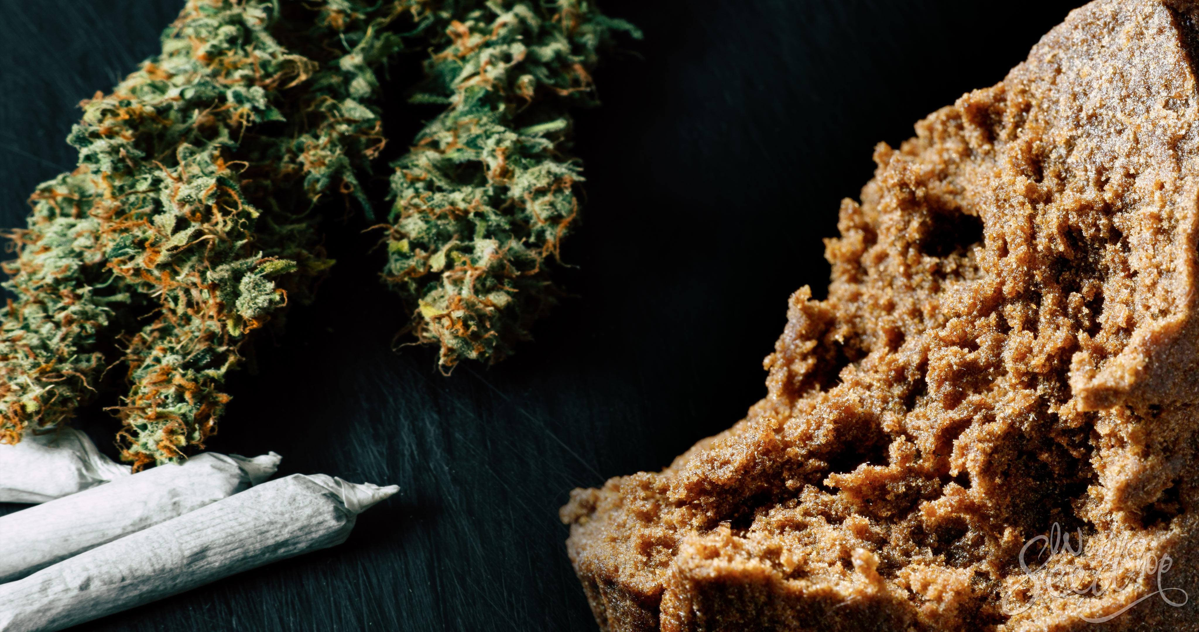 Unterschiede zwischen Haschisch und Gras - WeedSeedShop