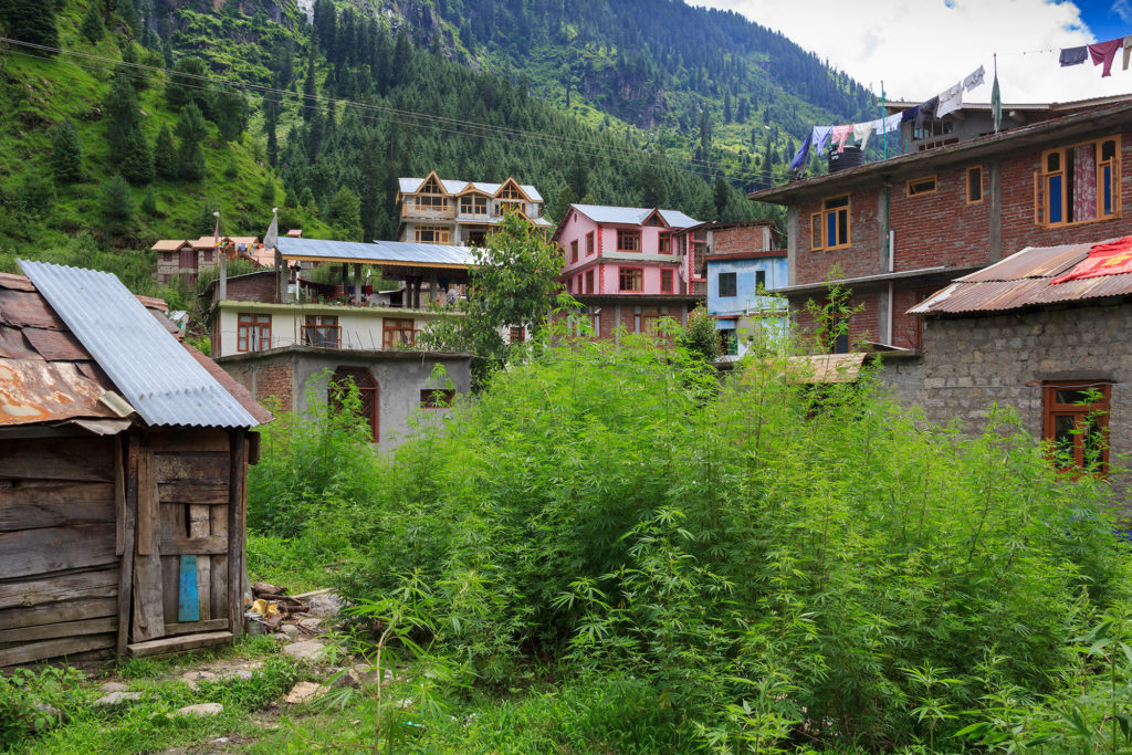 The Himalayan Villages of Wild Weed