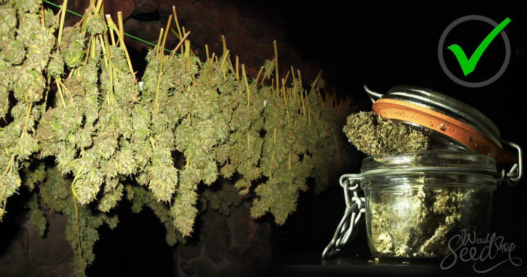Hoe je je wiet kunt drogen en curen weedseedshop - Hoe je je desktop kunt verfraaien ...
