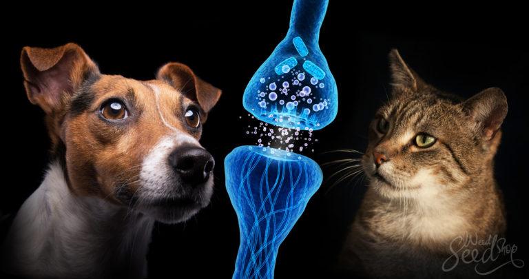 Hoe cannabis honden en katten kan helpen