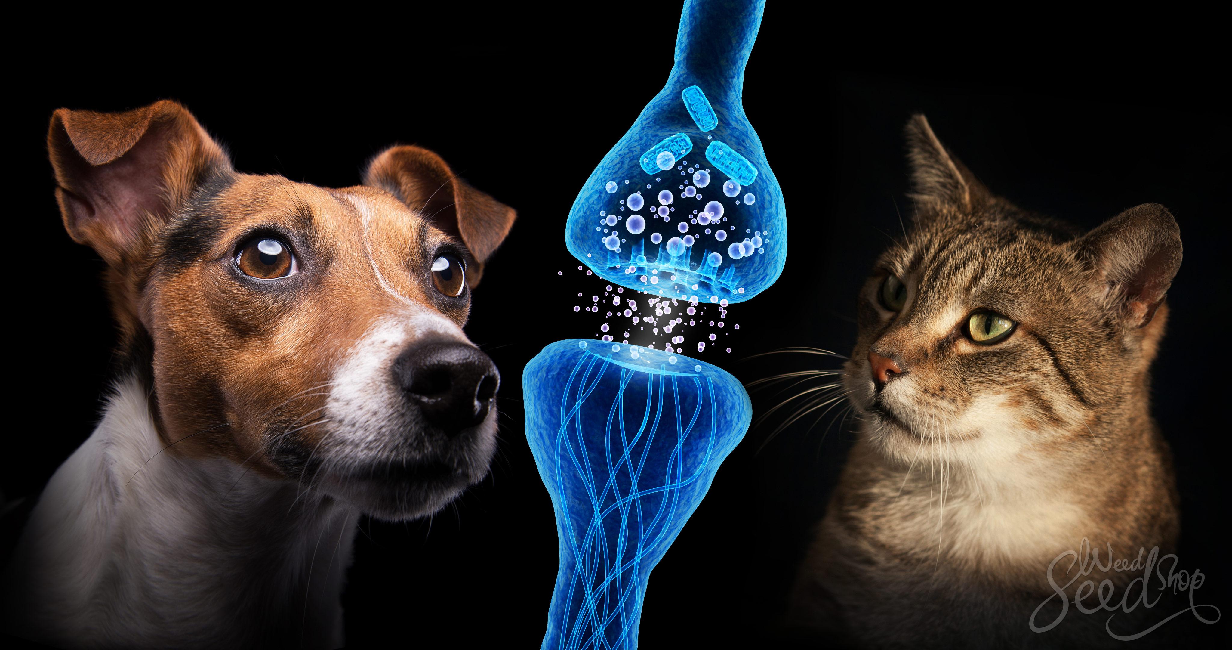 Le cannabis pour soulager les chats et les chiens - WeedSeedShop Blog