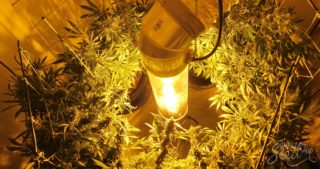 How To Grow Marijuana Vertically