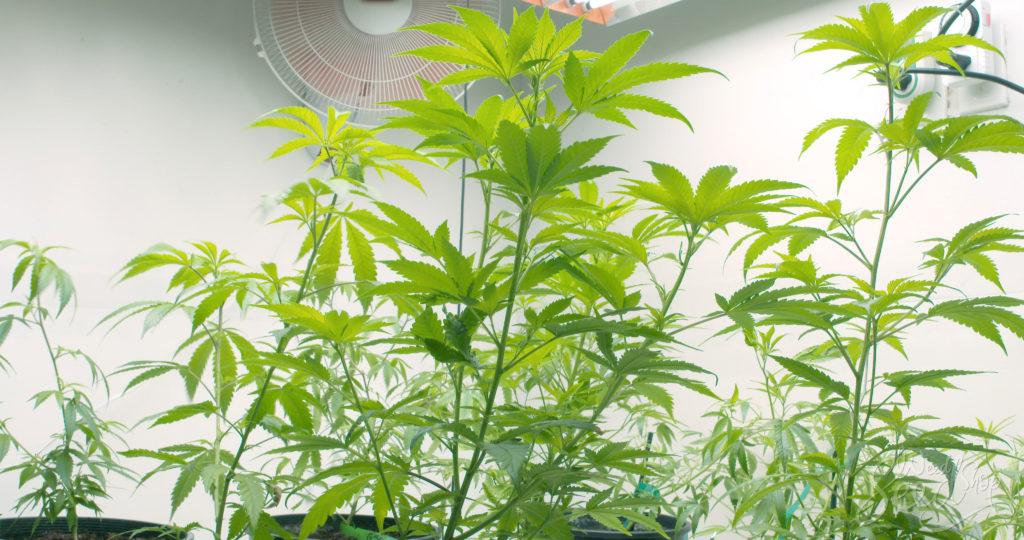 Hoe je je kweekruimte goed ventileert - WeedSeedShop