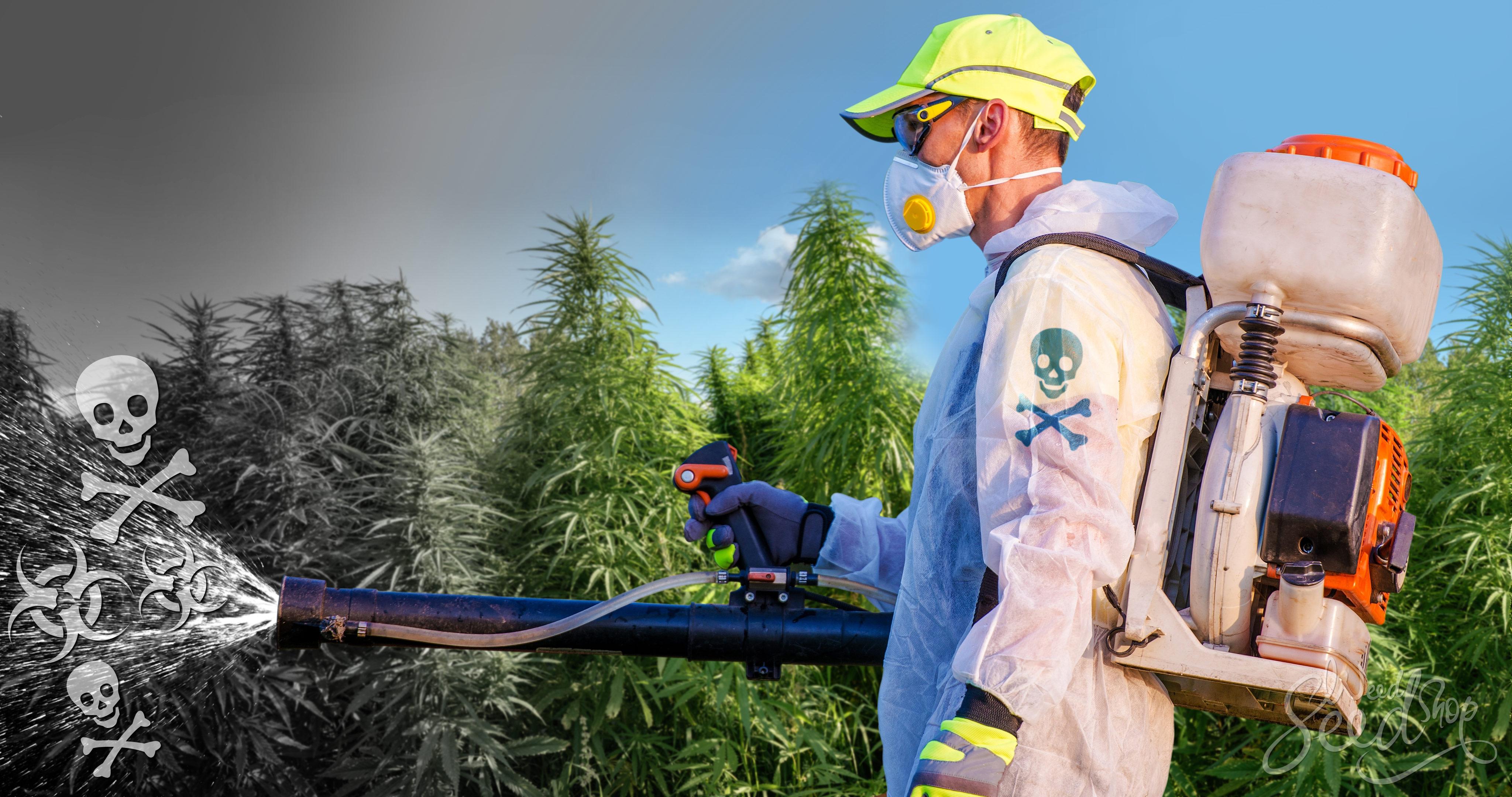 Het Kweken van Wiet: Waarom Je Pesticiden en Alternatieven Moet Vermijden - Weed Seed Shop Blog