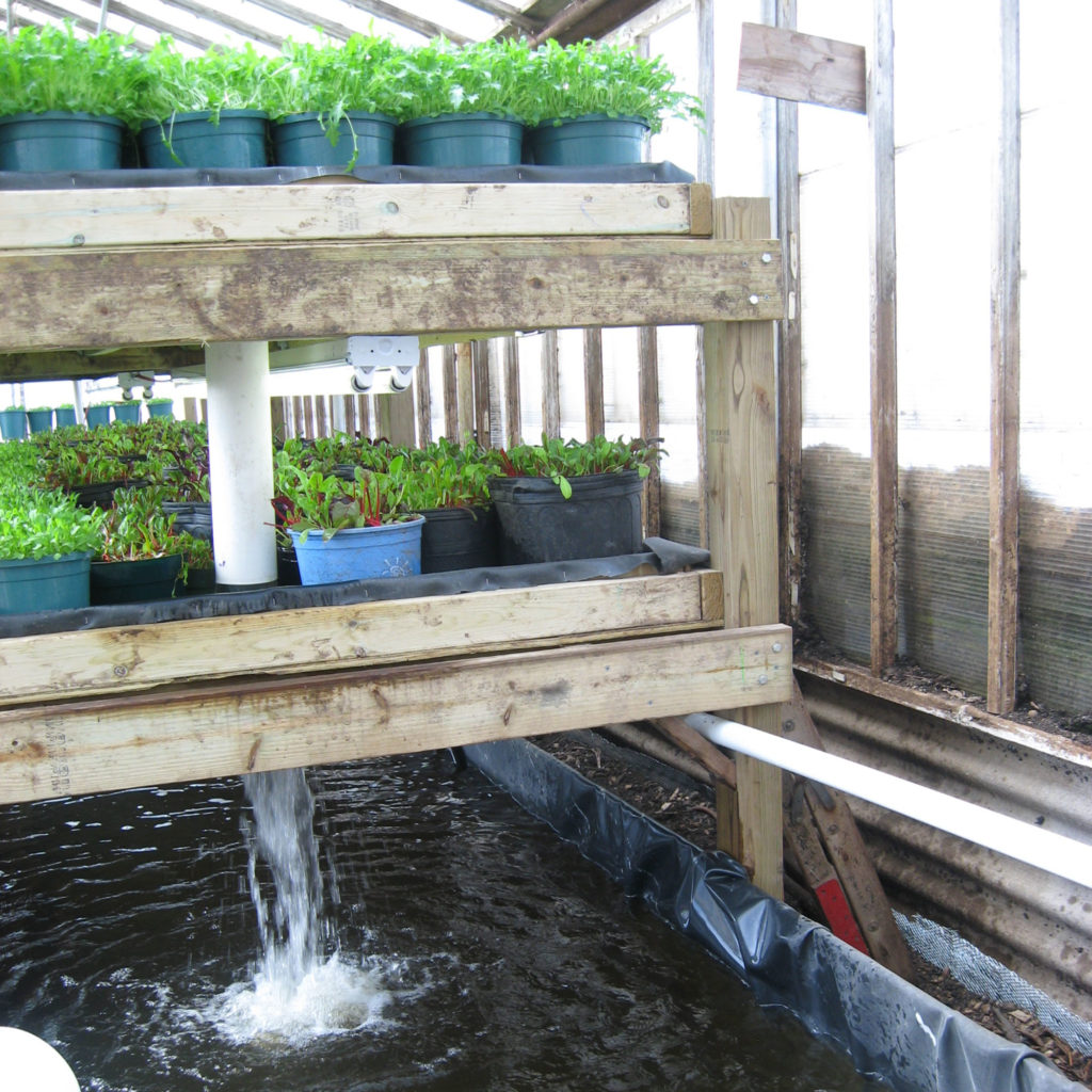 Faire pousser de la weed en hydroponie - WeedSeedShop