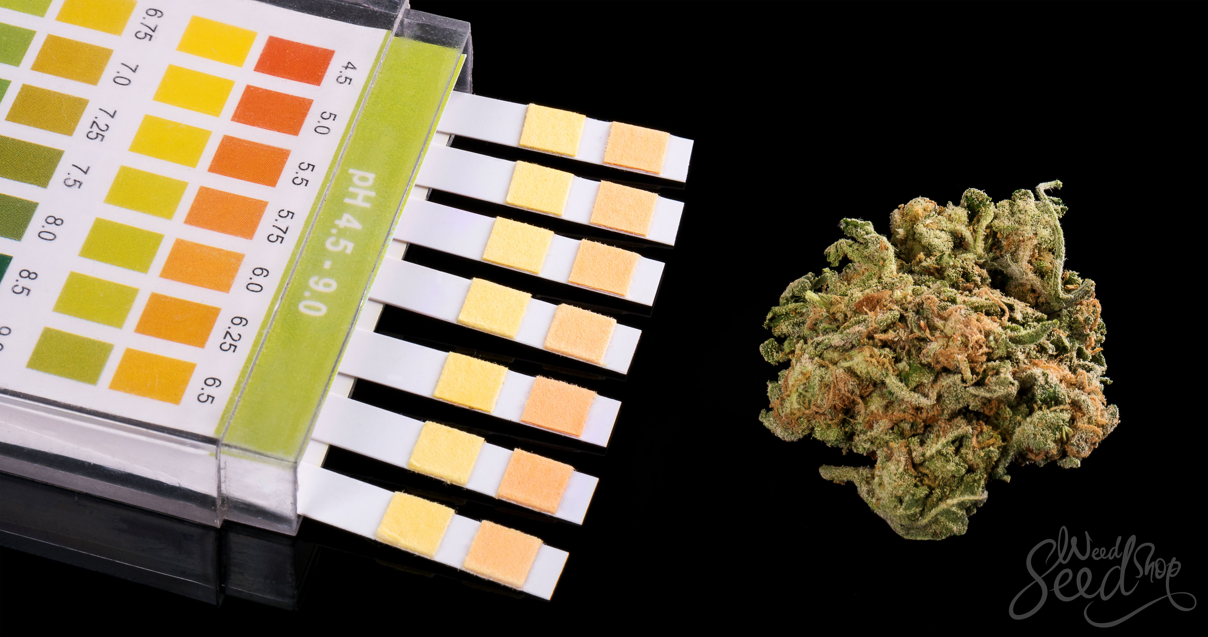 Den Drogentest auf Cannabis bestehen - WeedSeedShop