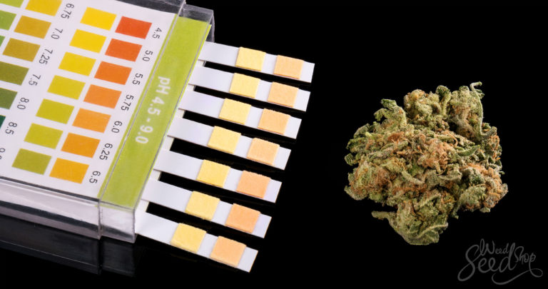 How to Pass A Drug Test for Weed