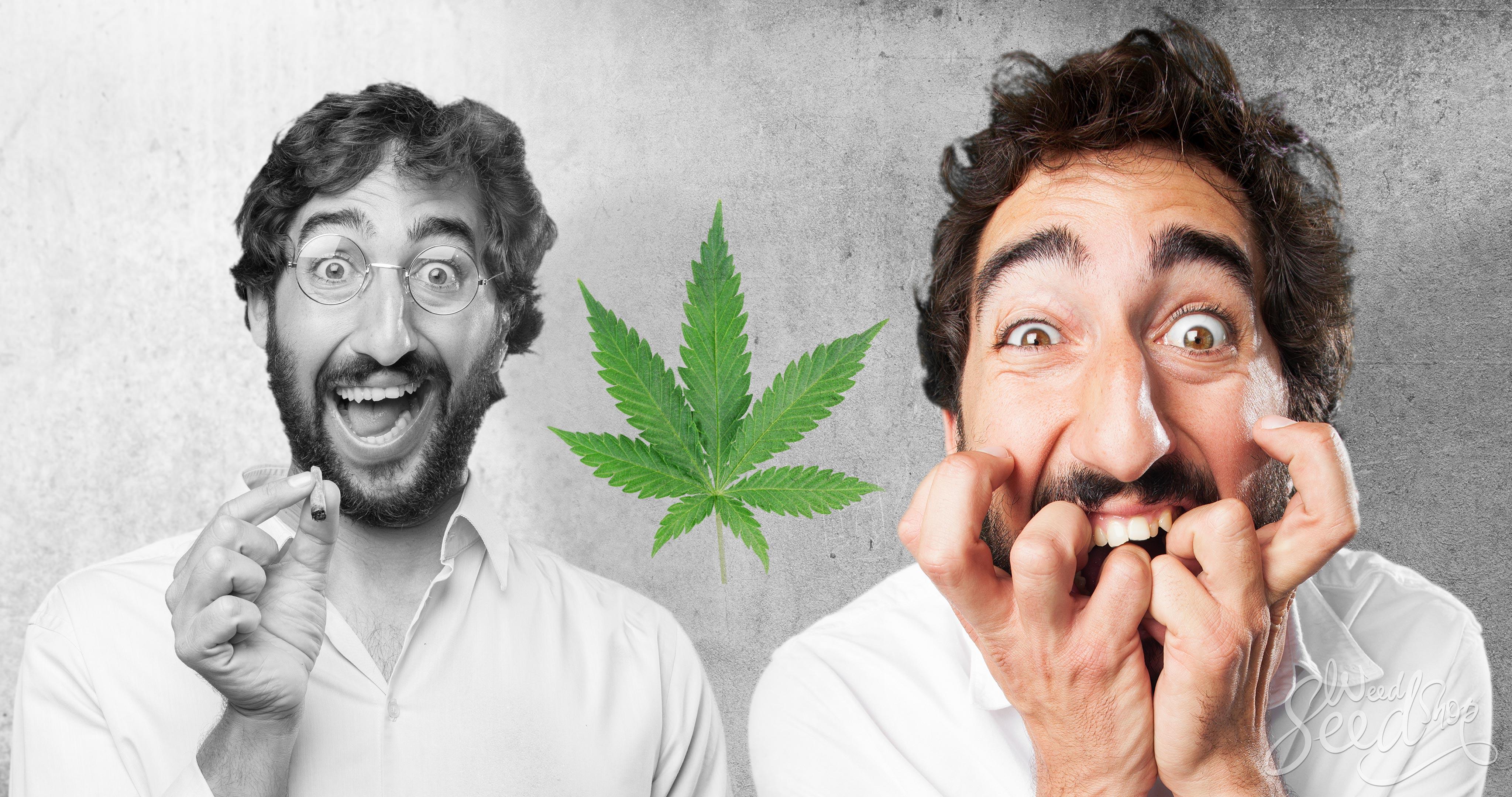 Comment fumer de la weed sans paranoïa - WeedSeedShop