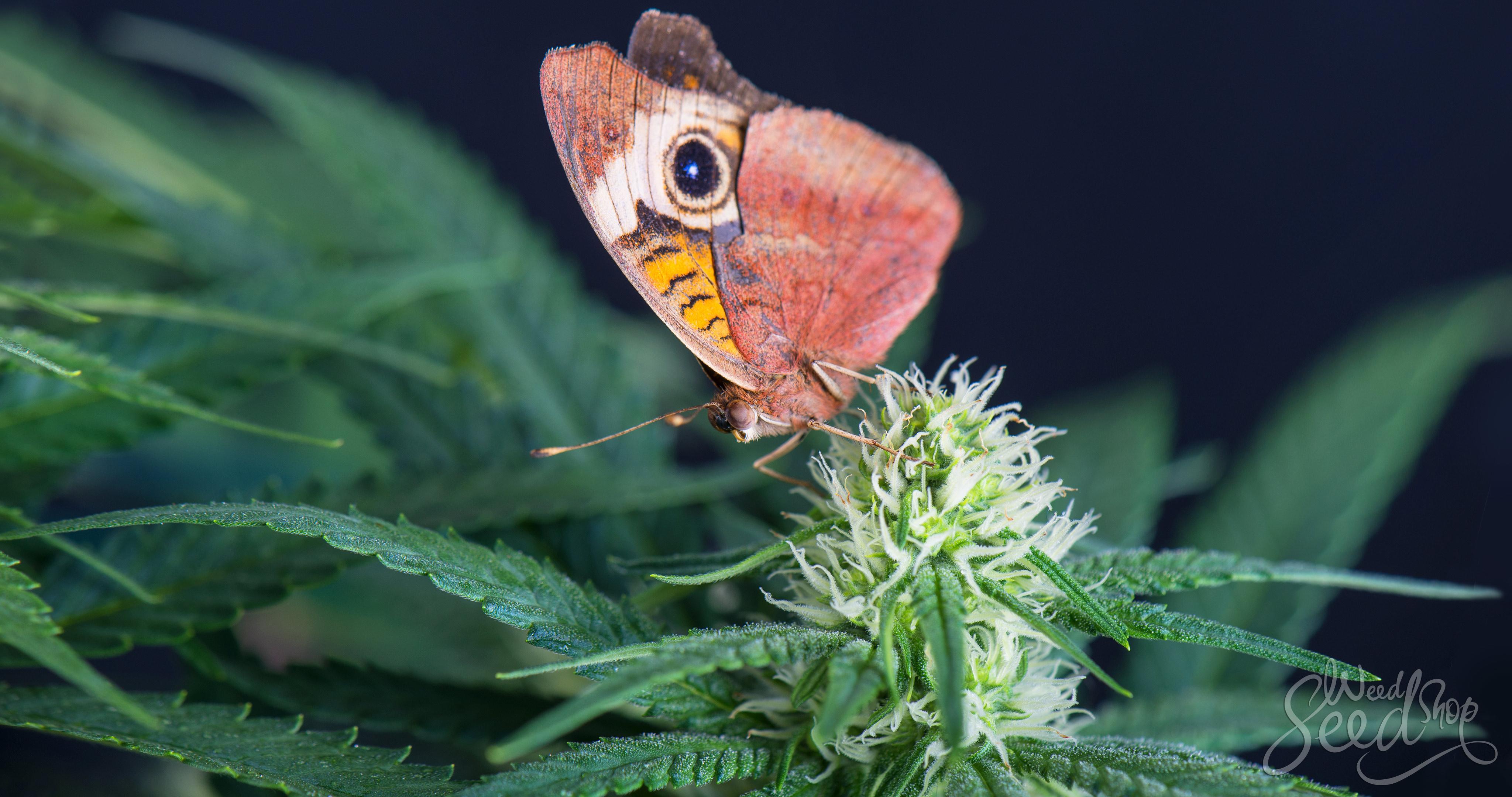 Cómo ser un fumón ecológico en 10 pasos - WeedSeedShop