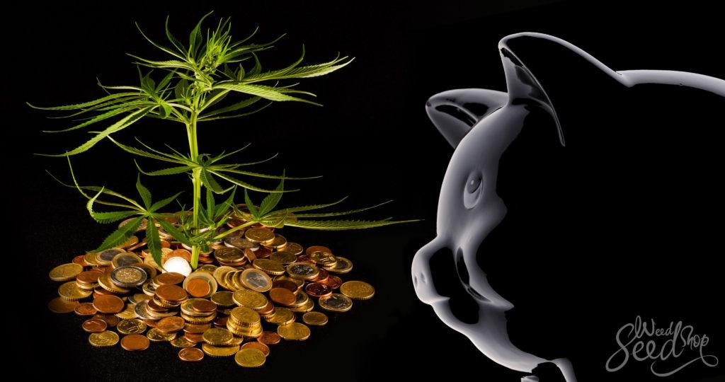 Cómo cultivar marihuana con poco dinero - WeedSeedShop Blog