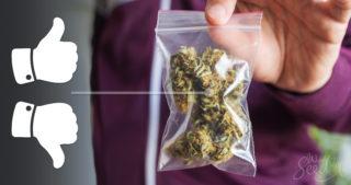 Pistas que indican que tu marihuana está mala – identificando cómo saber que tu marihuana sobrepasó su vida útil