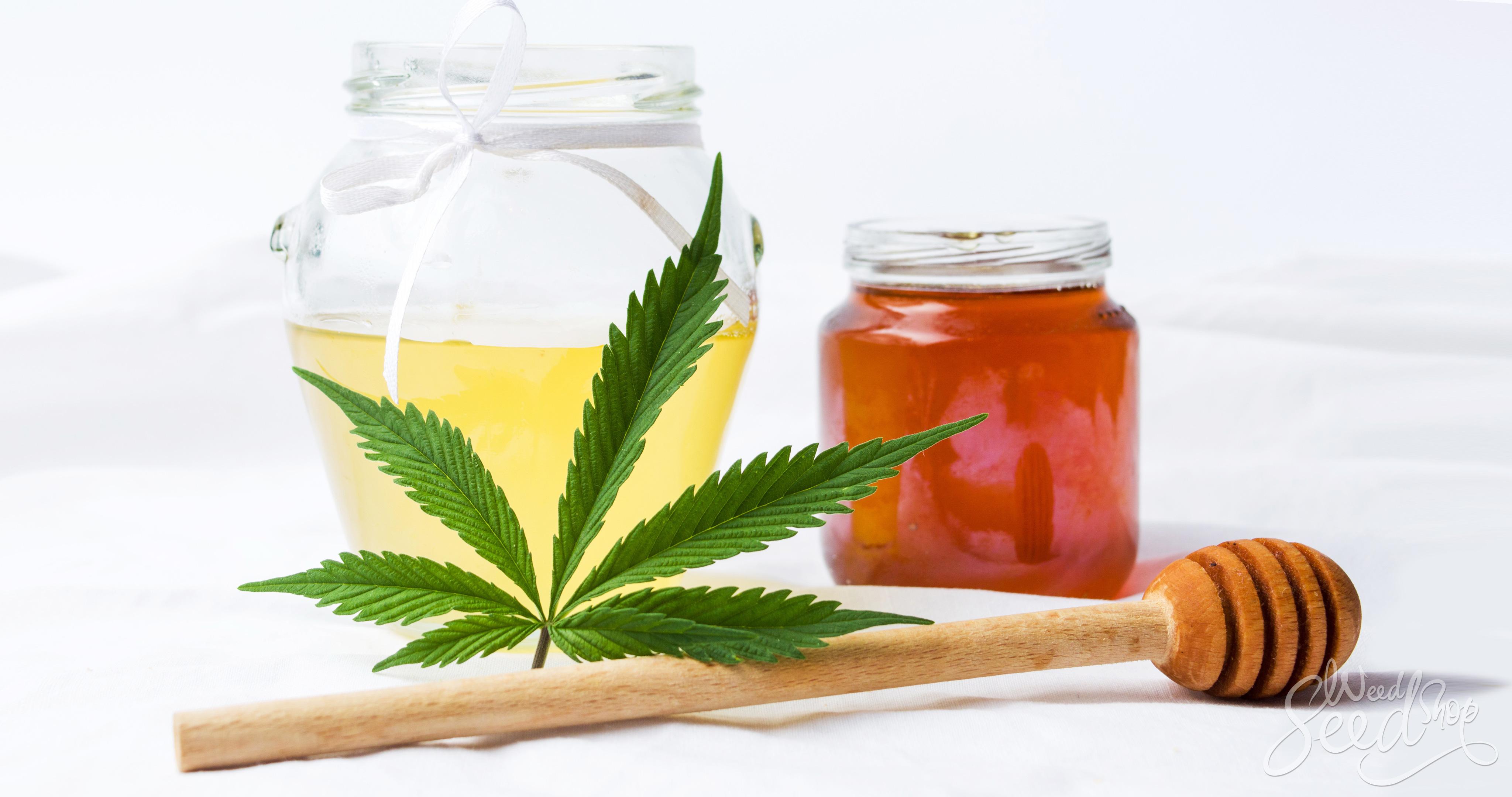 Cómo hacer miel infundida en cannabis - WeedSeedShop