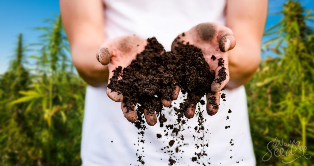Comment faire du th de compost pour vos plants de cannabis - Faire du compost en appartement ...