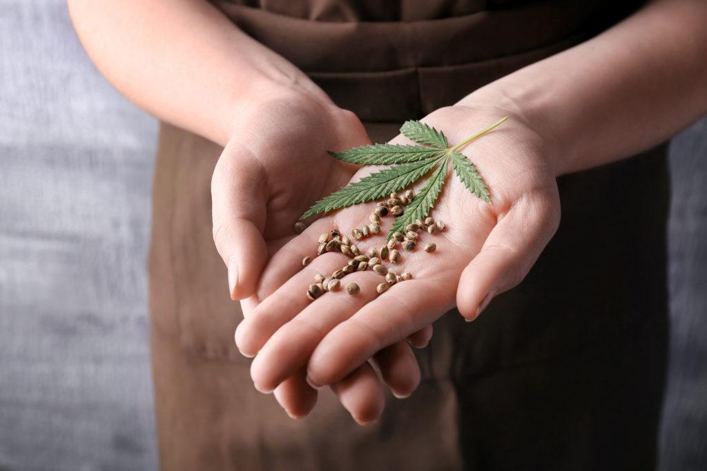 Wie man feminisierte Cannabis Samen macht - WeedSeedShop