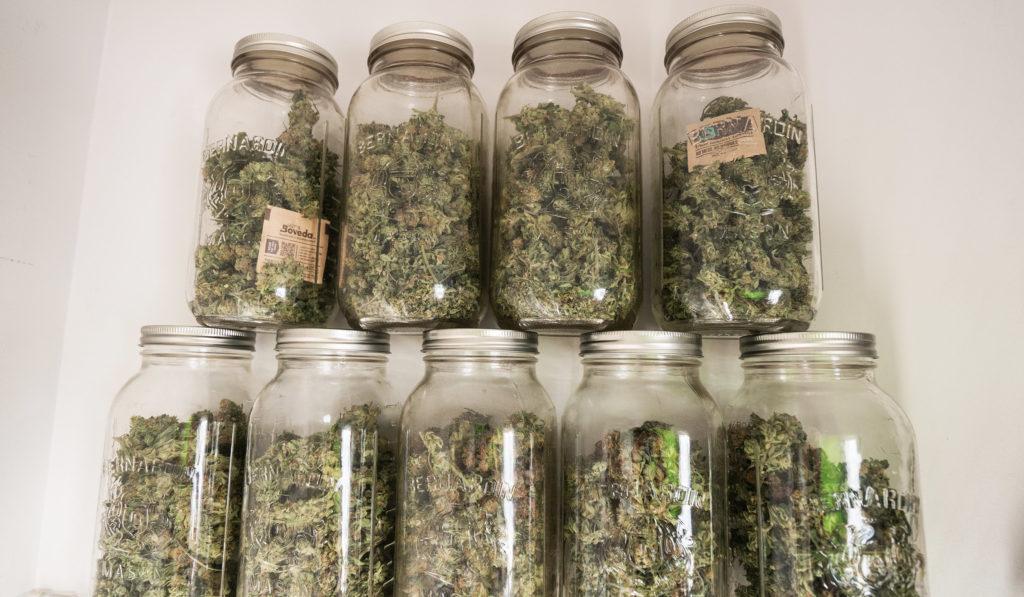 Wie man Gras lagert und es frisch hält - WeedSeedShop