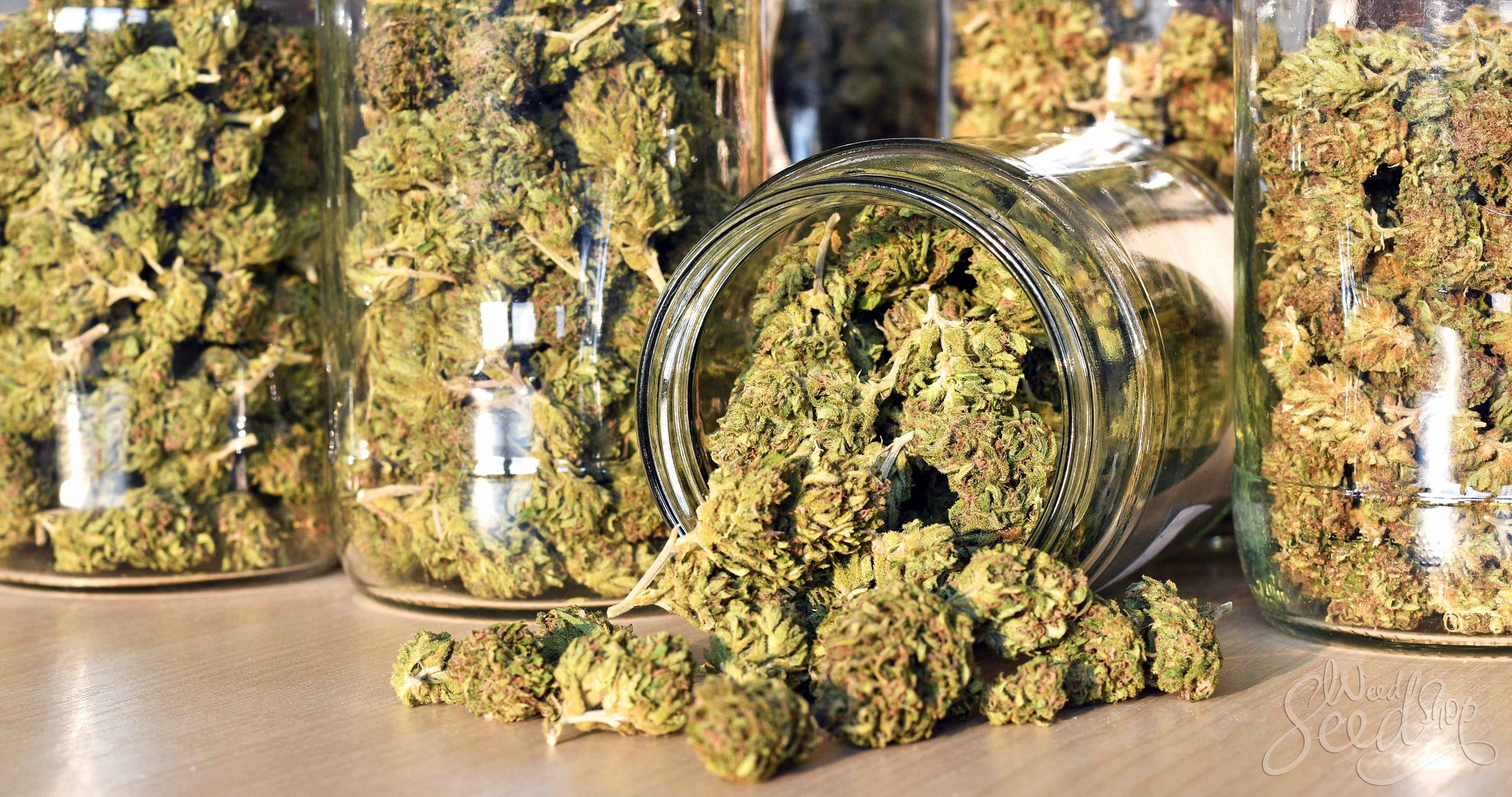 Comment stocker la weed et la garder fraîche WeedSeedShop