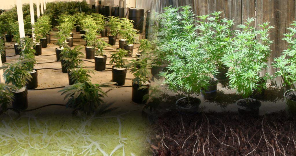 hydrokultur vs erde was ist besser weedseedshop. Black Bedroom Furniture Sets. Home Design Ideas